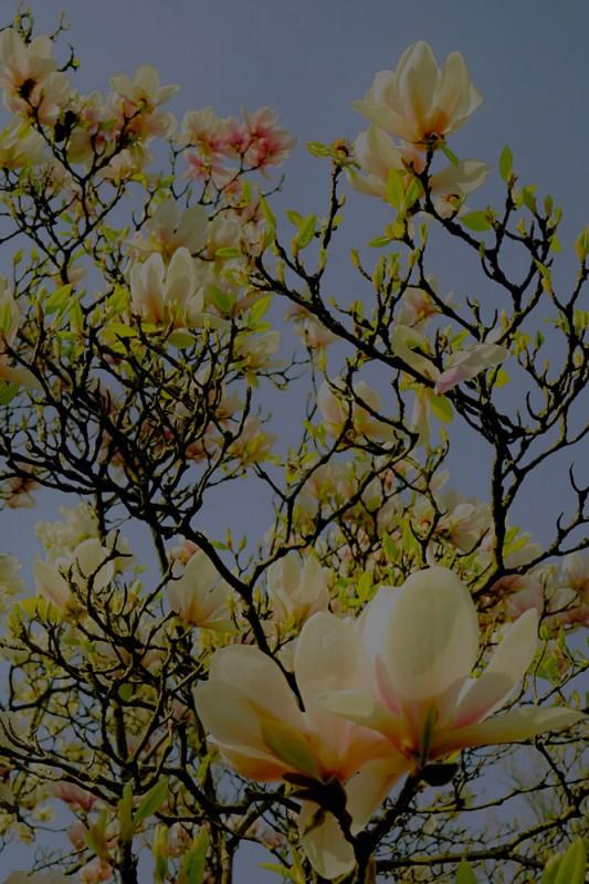Berit Uhlhorn | Flora Insomnia